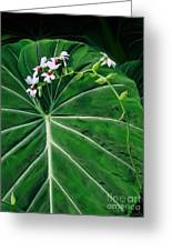 Beautiful Ivory Veins Of A Philodendron Greeting Card by Sue Melvin