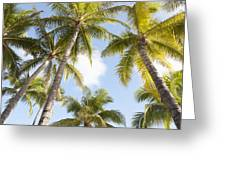 Beautiful Palms Greeting Card by Brandon Tabiolo