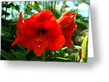 Beautiful Red Blossoms Greeting Card by Jeff  Swan