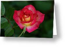 Beautiful Rose Greeting Card by Sandy Keeton