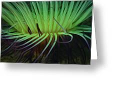 Beautiful Sea Anemone 3 Greeting Card by Lanjee Chee