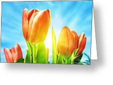 Beautiful Spring Tulips Background Greeting Card by Michal Bednarek