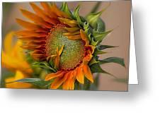 Beautiful Sunflower Greeting Card by John  Kolenberg