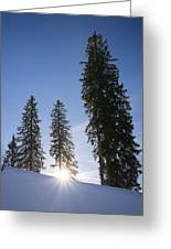Beautiful Trees On A Sunny Winter Day Greeting Card by Matthias Hauser