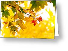 beauty Autumn Leaves Greeting Card by Boon Mee
