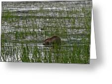 Beaver On Rest Lake Greeting Card by Lizbeth Bostrom