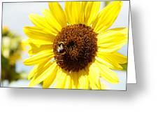 Bee Greeting Card by Les Cunliffe