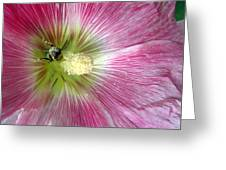 Bee Loving Greeting Card by Mike Podhorzer