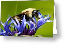 Bee On A Blue Flower Greeting Card by Matt Dobson