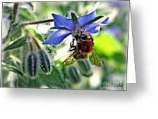 Bee On Borage Greeting Card by Morag Bates