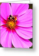 Bee On Pink Greeting Card by Bill Caldwell -        ABeautifulSky Photography