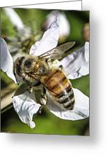 Bee Greeting Card by Steven  Taylor