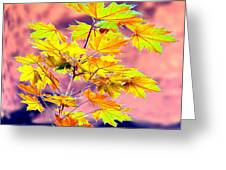 Belles Feuilles D'erable Greeting Card by Will Borden