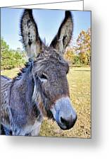 Bet He Gets Good Reception Greeting Card by Jan Amiss Photography