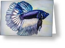 Betta Fish Greeting Card by Zina Stromberg