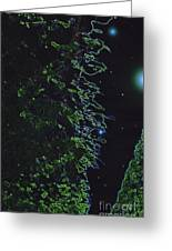 Between The Hedges  Greeting Card by First Star Art