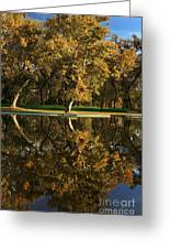 Bidwell Park Reflections Greeting Card by James Eddy