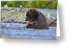 Big Brown Bear Eating Salmon In Stream Greeting Card by Dan Friend