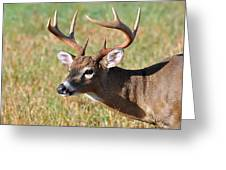 Big Buck Greeting Card by Todd Hostetter