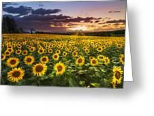 Big Field Of Sunflowers Greeting Card by Debra and Dave Vanderlaan