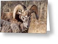 Big Horn Little Horn Greeting Card by Kevin  Dietrich