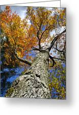 Big Orange Maple Tree Greeting Card by Christina Rollo
