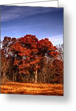 Big Red Greeting Card by Thomas Young