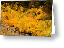 Big Thompson River - 9 Greeting Card by Jon Burch Photography
