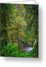 Bigfoot Country Greeting Card by Jon Burch Photography
