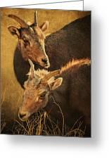 Bighorn Sheep Of The Arkansas River  Greeting Card by Priscilla Burgers