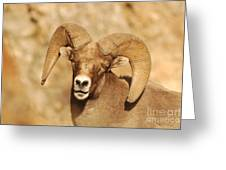 Bighorn Sheep Utah 6 Greeting Card by Cody Hoagland