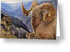 Bighorn Trio Greeting Card by Steve Spencer