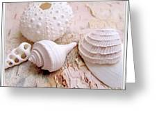 Birch And Shells Greeting Card by Danielle  Parent