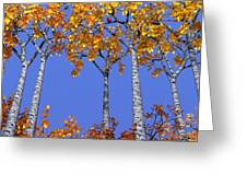 Birch Grove Greeting Card by Cynthia Decker