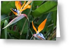 Bird of Paradise Greeting Card by Carol Groenen