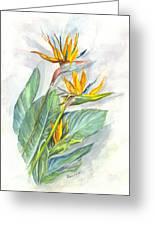 Bird Of Paradise Greeting Card by Carol Wisniewski