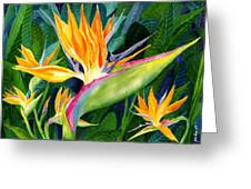 Bird-of-paradise Greeting Card by Janis Grau