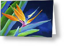 Bird Of Paradise Greeting Card by Stephen Anderson