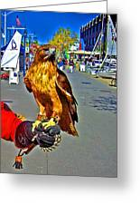 Bird Of Prey At Boat Show 2013 Greeting Card by Joseph Coulombe