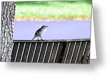 Bird On Bench Greeting Card by Aimee L Maher Photography and Art