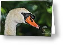 Bird - Swan - Mute Swan Close Up Greeting Card by Paul Ward