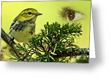 Bird Watching Greeting Card by Inspired Nature Photography By Shelley Myke