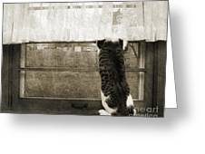 Bird Watching Kitty Cat Bw Greeting Card by Andee Design