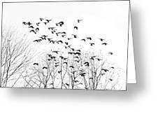 Birds Greeting Card by Kevin Barske