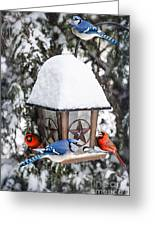 Birds On Bird Feeder In Winter Greeting Card by Elena Elisseeva