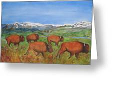 Bison At Yellowstone Greeting Card by Patricia Beebe