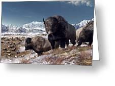 Bison Herd in Winter Greeting Card by Daniel Eskridge