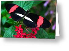 Black And Coral Greeting Card by Karen Stephenson