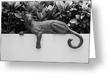 Black And White Cat Greeting Card by Rob Hans