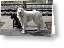 Black And White Dogs 5d25873 Greeting Card by Wingsdomain Art and Photography